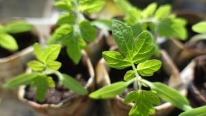 plant-999375_1920